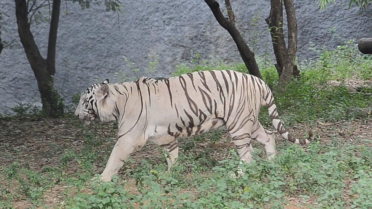 Vandalur Zoo, Tamil Nadu