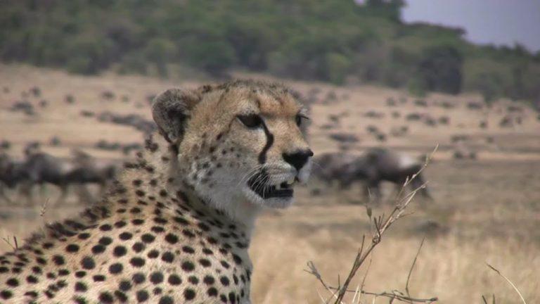 Serengeti National Park Safari – Plan a Trip with Simba Adventures