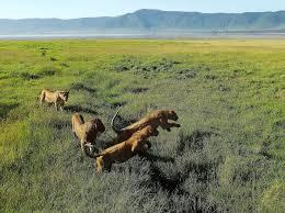 African Jungle Safari Tours with Simba Adventures