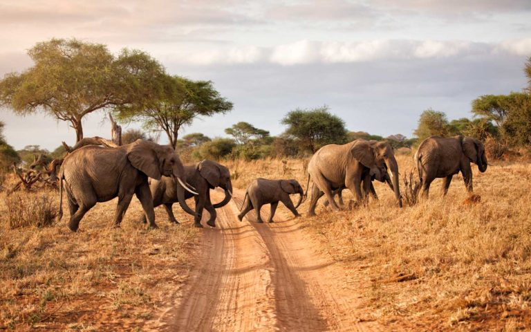 African Safari Tour Packages for Unforgettable Jungle Safari in Africa