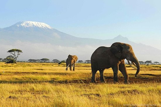 African Safari Adventures to Explore the Real Wildlife of Africa
