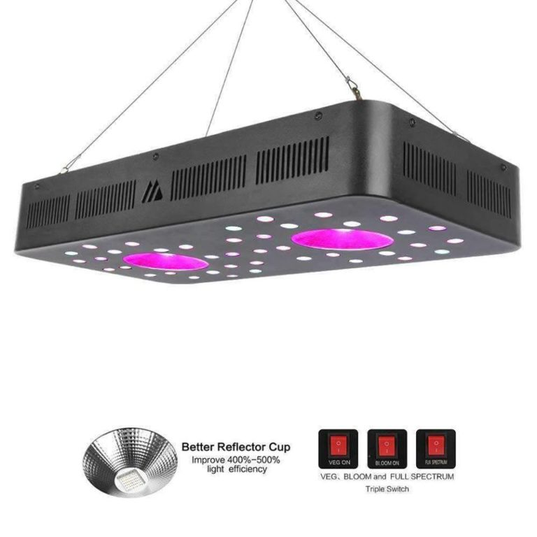 Light up Your Event with the Light of Your Choice
