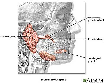 Let's understand what is Salivary Gland