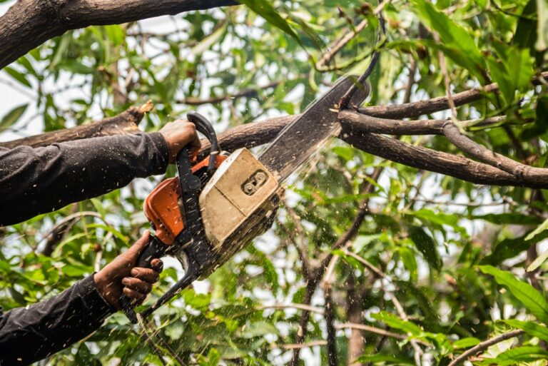 Importance of Tree Trimming Services