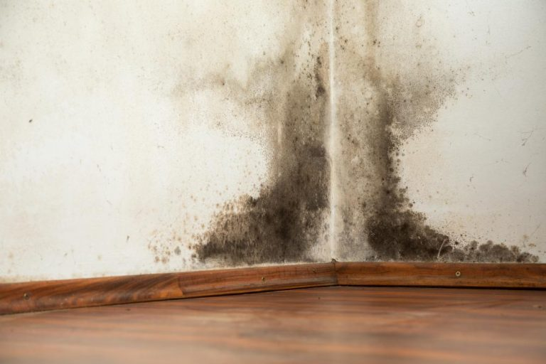How a mold claim can become an issue