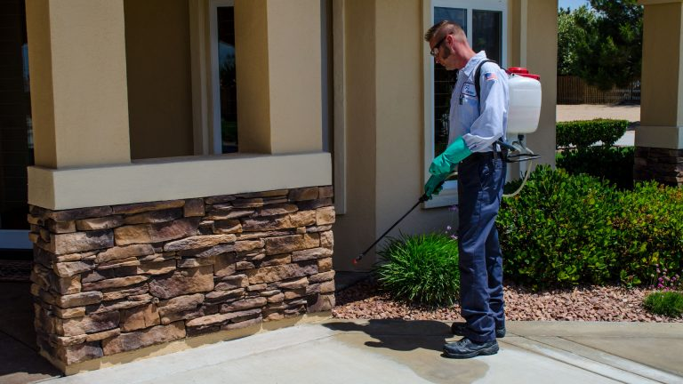 4 Important Things to Know When Hiring a Pest Control Company